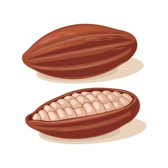 カカオ豆の実。ベクトルフラットカラーイラスト。白い背景で隔離。