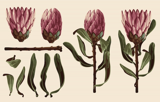 Fully editable vector illustration of floral clip art sets.