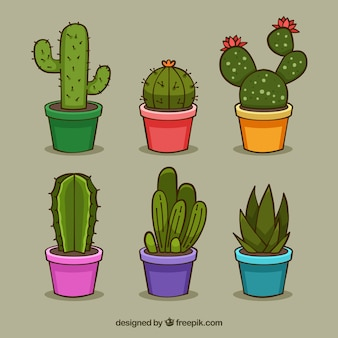 Fun pack of colorful cactus