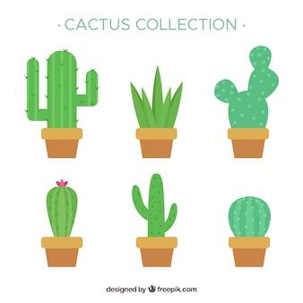 Pacchetto divertente di cactus piatto