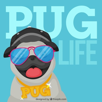 Fun pug with urban style