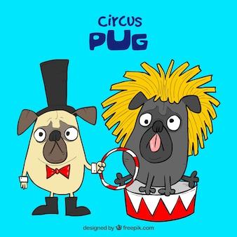 Веселые мопсы с цирковыми костюмами