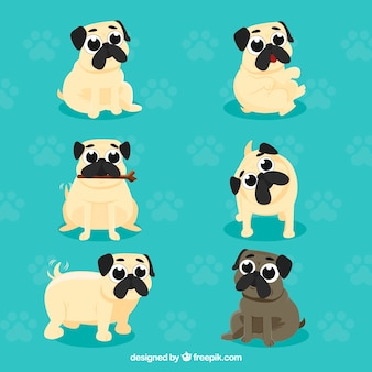 Fun pugs with cute style