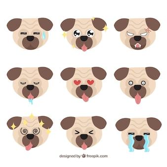 Fun variety of pug faces