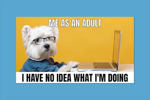 Divertente essere un meme per adulti