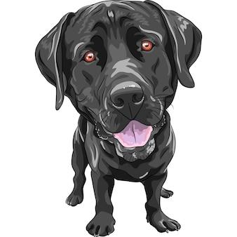 Funny cartoon black dog breed labrador retriever
