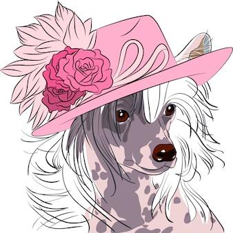 Смешная мультипликационная хипстерская собака китайская хохлатая порода