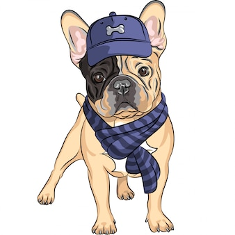 Funny cartoon hipster dog french bulldog breed