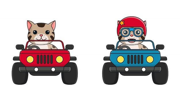 車のコレクションを運転する面白い猫