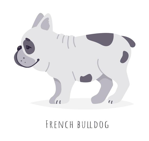 재미 있은 귀여운 프랑스 불독 강아지 평면 스타일 그림 흰색 배경에 고립