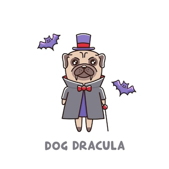 Funny dog breed pug in dracula costume with bats