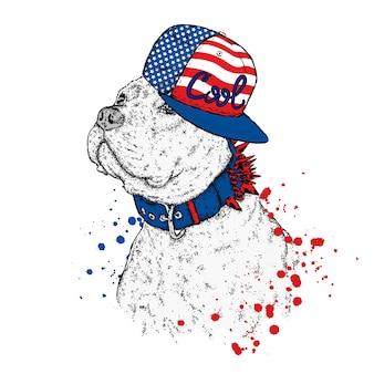 帽子をかぶった面白い犬。