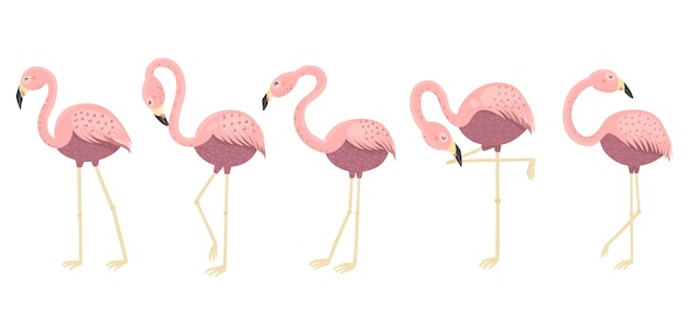 Funny flamingos in different poses collection. isolated elements