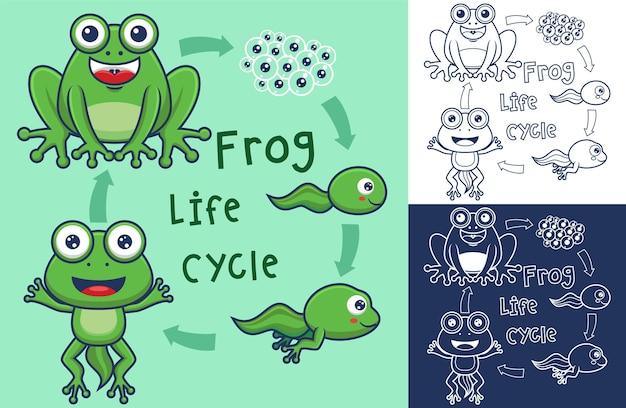 Funny frog life cycle cartoon