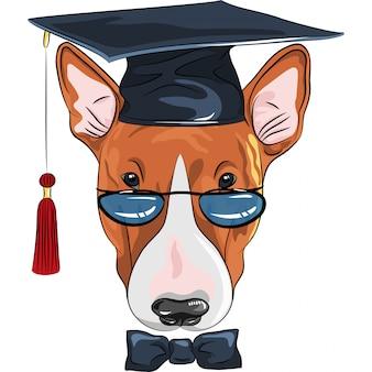 Смешная дипломированная собака бультерьер