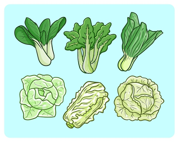 Funny mustard greens and cabbage in simple doodle style