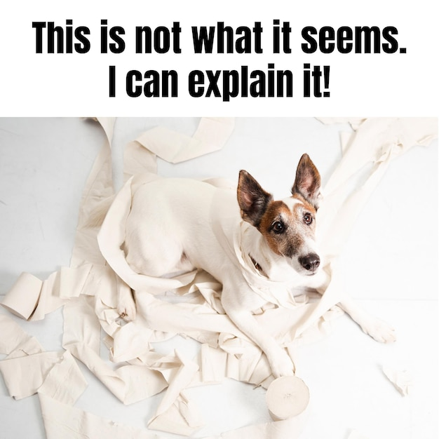 Funny naugthy dog animal meme