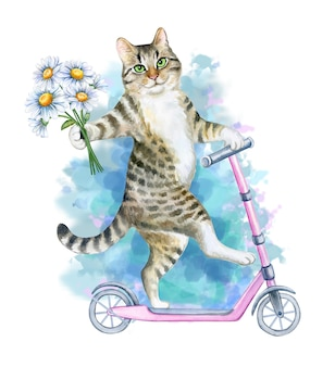 Funny playful cat rides a pink scooter isolated on white background watercolor illustration