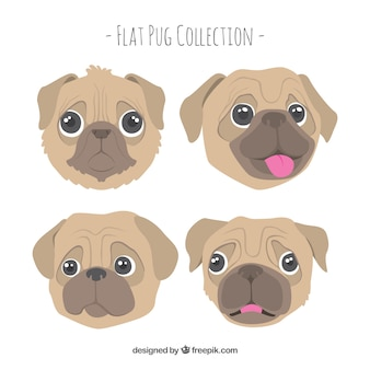 Funny pug faces with lovely style