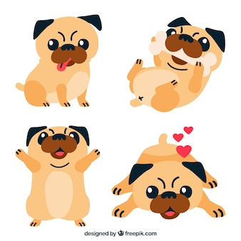 Funny pugs with flat design