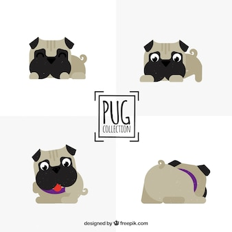 Funny pugs with lovely style