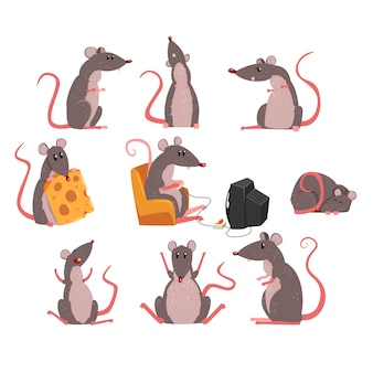 Funny rodent character in different situations illustrations on a white background