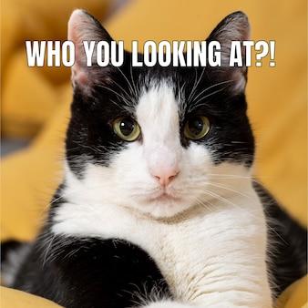 Смешной серьезный кот животное мем