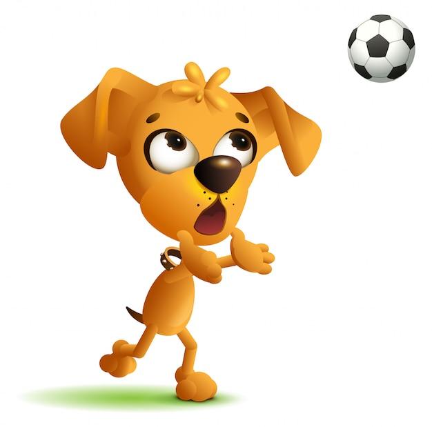 面白い黄色い犬のゴールキーパーがサッカーボールをキャッチ