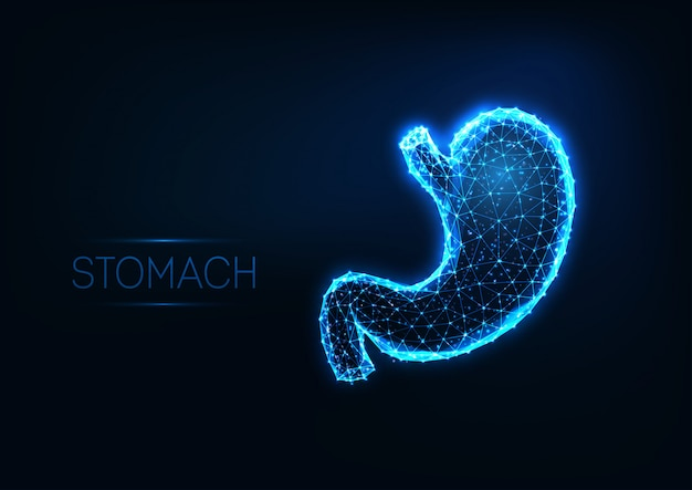 Futuristic glowing low polygonal human stomach isolated on dark blue