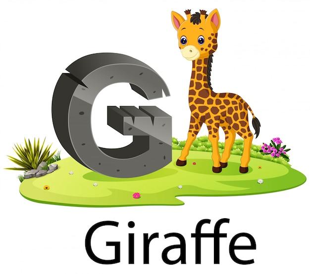 本物の動物とキリンのかわいい動物園動物アルファベットg