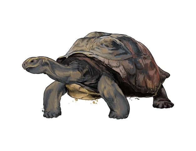 Галапагосская черепаха из всплеска акварели