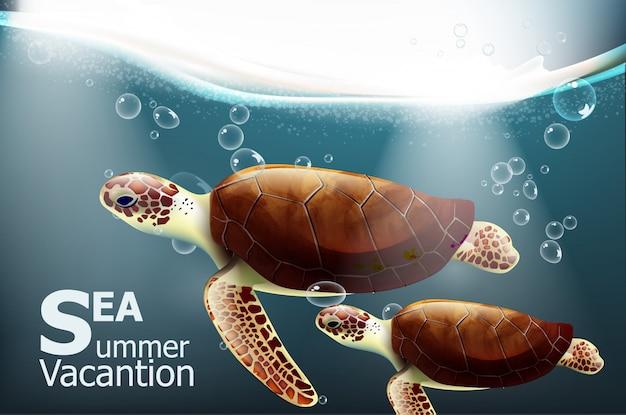 ガラパゴスカメ夏の海底カード