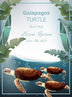 Galapagos turtles summer undersea card