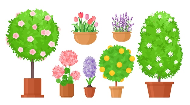 Garden flowers in pots. roses bush, tulips and in flowerbed, fruit tree. potted lilac and lavender