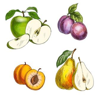 庭の果物。リンゴ、ナシ、プラム、アプリコット。