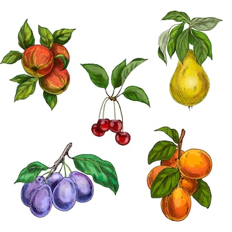 葉と枝を持つ庭の果物。チェリー、リンゴ、ナシ、プラム、アプリコット。