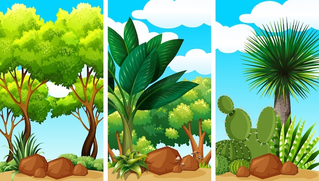 식물과 바위가있는 정원 장면