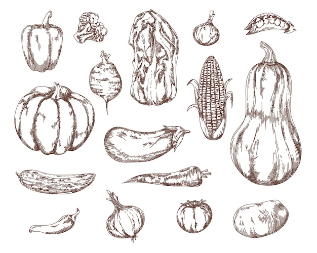 Garden vegetables salad ingredients sketch set