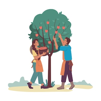 Gardeners man and woman gathering harvest from appletree isolated cartoon characters farmers
