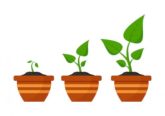 園芸。植物の成長段階。フラワーポットの種子の芽。
