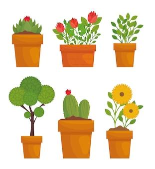 鉢植えのデザイン、庭の植栽と自然の葉を持つ園芸植物と花