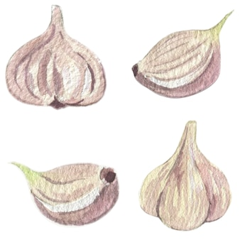 Garlic collection. watercolor illustration. vector isolated elements.