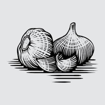 Garlic in graphic style hand-drawn illustration