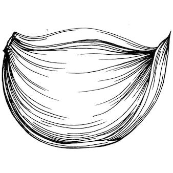 마늘 핸드 드로잉 스케치 그림입니다. 새겨진 스타일. 농업 시장의 제품. 디자인 메뉴, 레이블, 배지, 배너 및 프로모션에 가장 적합합니다.
