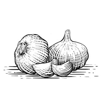 Иллюстрация чеснока в стиле гравюры premium vecor