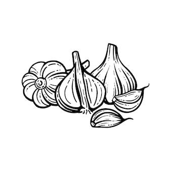 Набор чеснока. рисованной иллюстрации нарезанного чеснока. изолированный фон. со слоями.