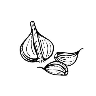 Набор чеснока. рисованные иллюстрации. нарезанный чеснок изолированный фон.