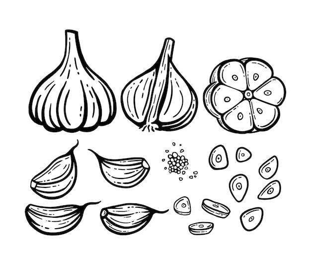 Набор чеснока. рисованные иллюстрации. вектор нарезанный чеснок, семена.