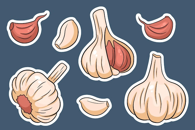 Garlic set. head of garlic, cloves, peeled and husked. in cartoon style stickers. vector illustration for design and decoration.