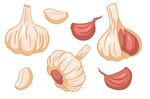 Garlic set. head of garlic, cloves, peeled and husked. in a cartoon style. vector illustration for design and decoration.